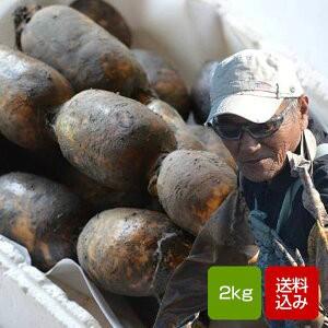 れんこん 無農薬 2キロ 自然農法栽培 白石レンコン 蓮根