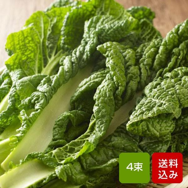 かつお菜 4束 カツオ菜/かつおな/カツオナ/鰹菜 送料無料 【年末ご予約商品】