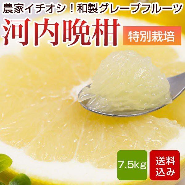 河内晩柑 特別栽培 7.5kg ジューシーみかん 熊本県産 母の日 ギフト