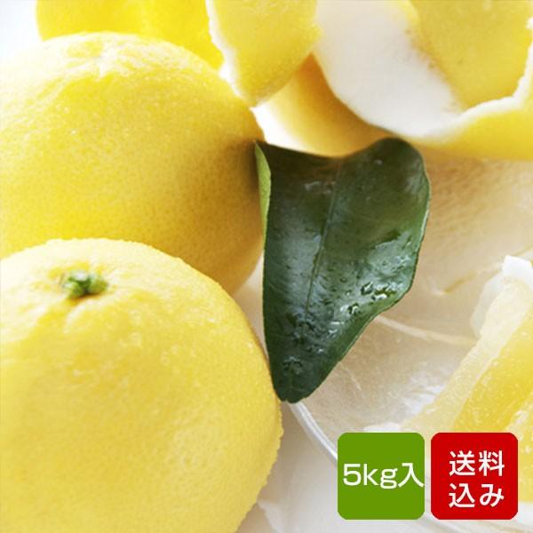 日向夏 5kg 宮崎県綾町産 ニューサマーオレンジ ギフト 送料無料