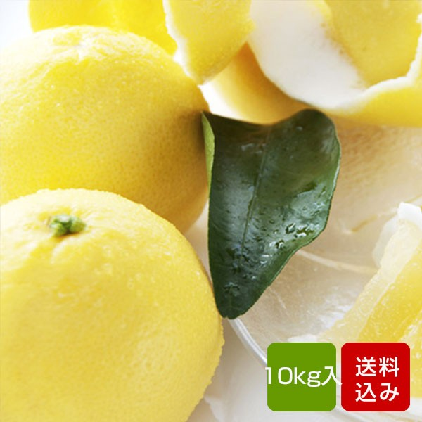 日向夏 10kg 宮崎県綾町産 ニューサマーオレンジ ギフト 送料無料