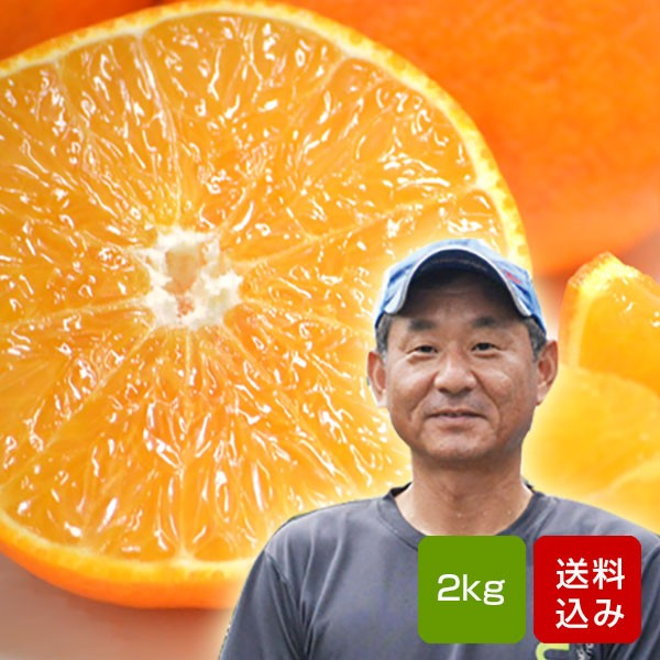 天草オレンジ 2kg 国産オレンジ おひさまきらりん 大分産 お中元 送料無料