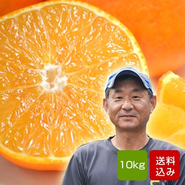 天草オレンジ 10kg 国産オレンジ おひさまきらりん 大分産 お中元 送料無料