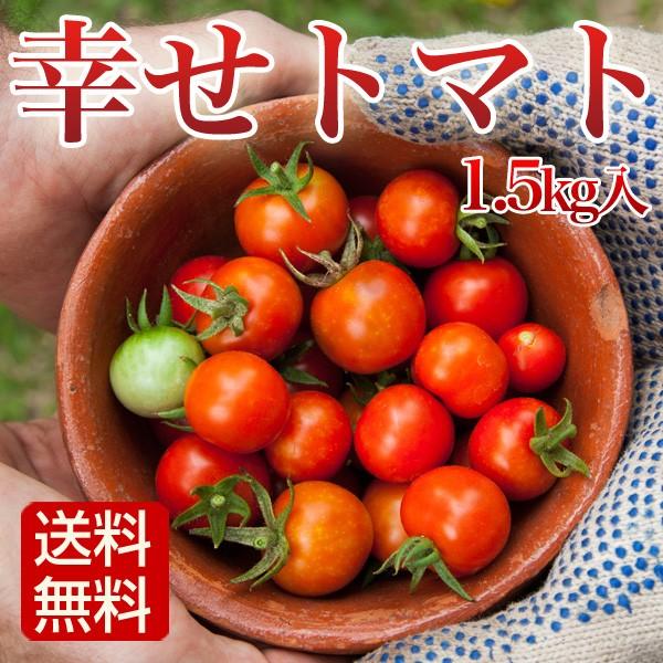 トマト 1.5kg 幸せトマト ミニトマト 長崎県産