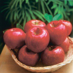 【贈答用:予約販売・送料込】期間限定!信州りんご 特選完熟サンふじ10kg(約26個〜36個入)(信州長野のお土産 林檎 苹果 リンゴ)