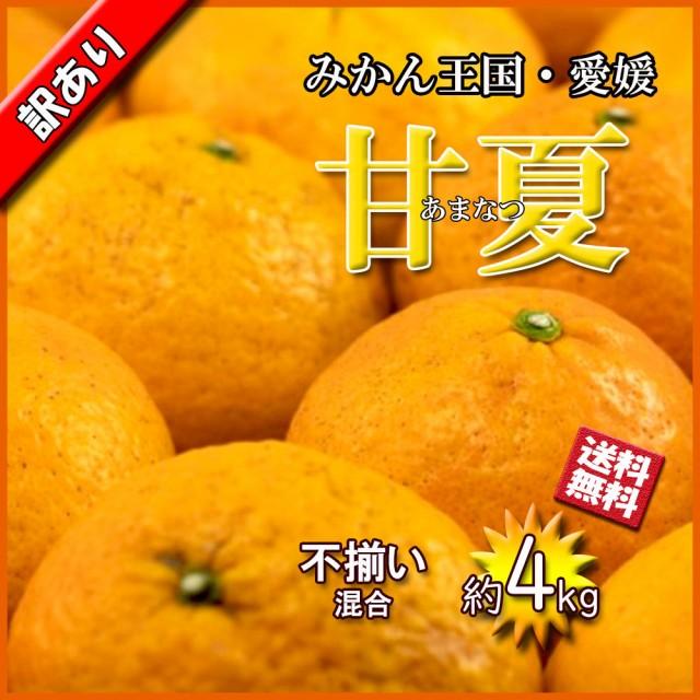 甘夏 甘夏柑橘 愛媛県産 あまなつ 夏みかん 春 柑橘 約4kg 不揃い 混合 送料無料