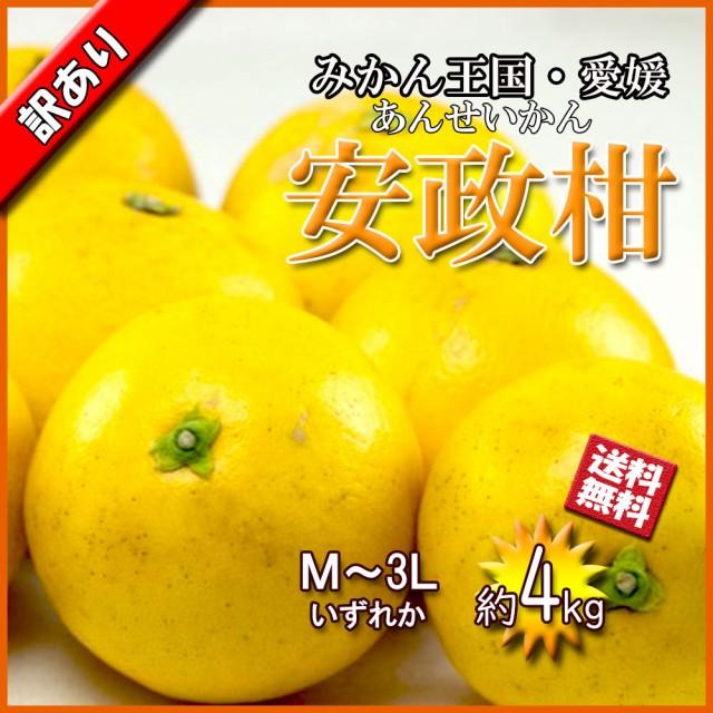 安政柑 愛媛県産 あんせいかん 文旦 ぶんたん 春 柑橘 約4kg 送料無料