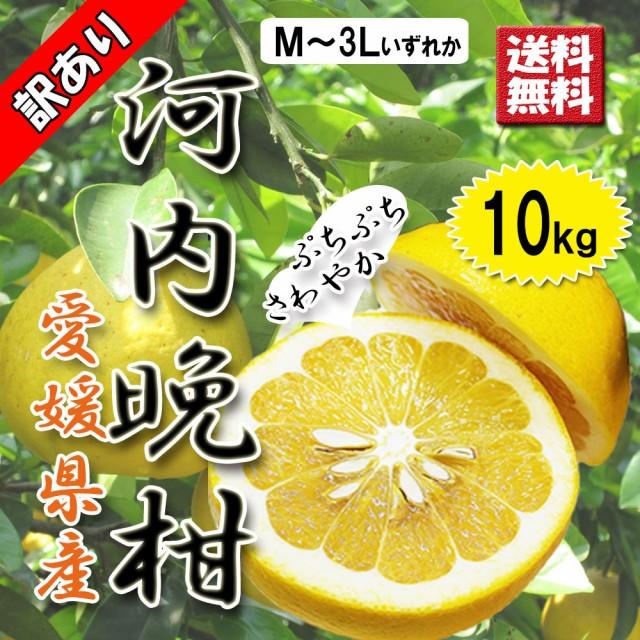 河内晩柑 訳あり 愛媛県産 和製グレープフルーツ ジューシーオレンジ M-3L 10kg 送料無料