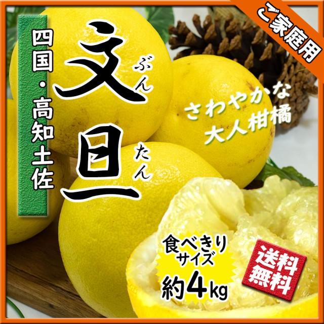 文旦 ぶんたん 箱買い 家庭用 高知県産 土佐文旦 大人の柑橘 食べきりサイズ 4kg 送料無料