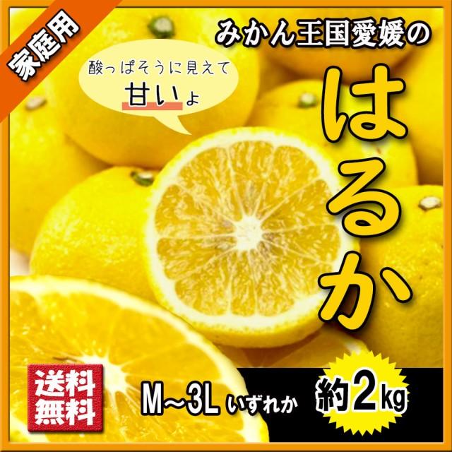 はるか 家庭用 箱買い 希少柑橘 送料無料 愛媛県産 2kg M〜3L