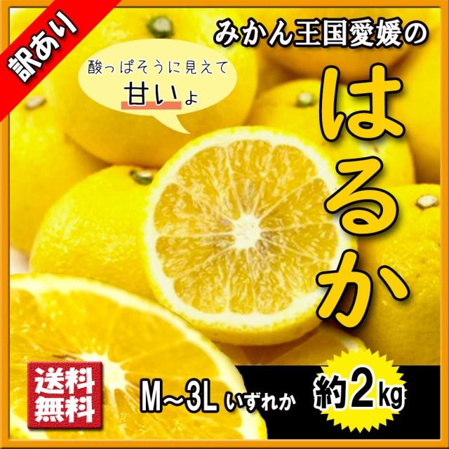 はるか 訳あり 箱買い 希少柑橘 送料無料 愛媛県産 2kg M〜3L キズ多め