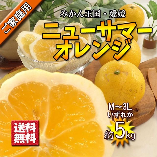 日向夏 ニューサマーオレンジ 愛媛県産 小夏 春柑橘 中の綿まで食べてください 約5kg 送料無料