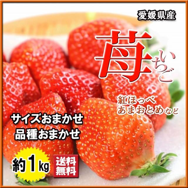 いちご 苺 イチゴ 愛媛県産 品種おまかせ サイズおまかせ 約1kg 送料無料