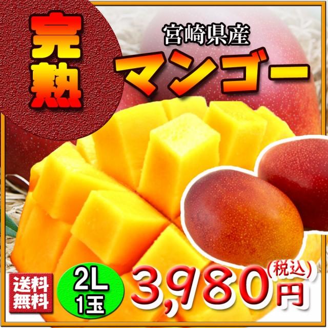 マンゴー 宮崎県産 完熟マンゴー 完熟 2L 1玉 送料無料