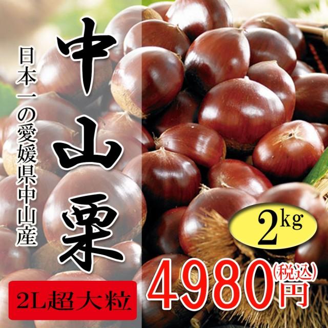 中山栗 愛媛県産 日本一の栗 大粒 甘くてホクホクです 2L超 2kg 送料無料