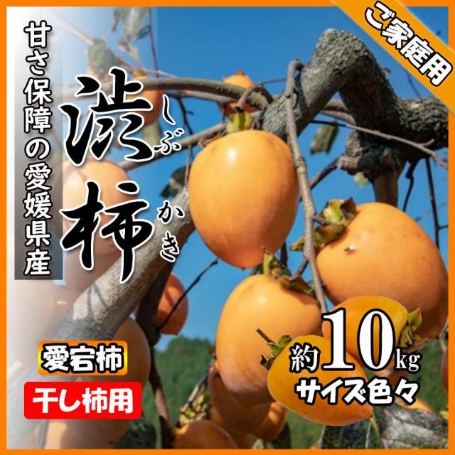 柿 かき 渋柿 干し柿用 愛宕柿 約10kg 愛媛県産 送料無料