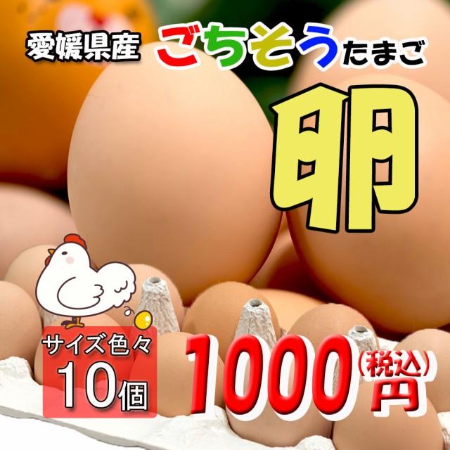 たまご ごちそうたまご 卵 玉子 鶏卵 こだわり製法 濃厚うまいたまごです 10個 送料無料