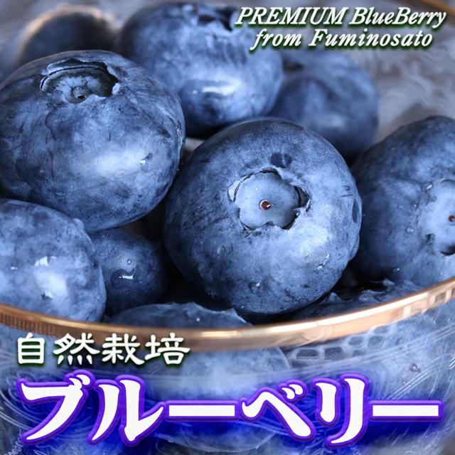 ブルーベリー 父の日 ギフト プレゼント 送料無料 自然栽培 約1kg(約500g×2Pac) 高級 フルーツ 果物 くだもの 栃木 ふるさと 産直 お