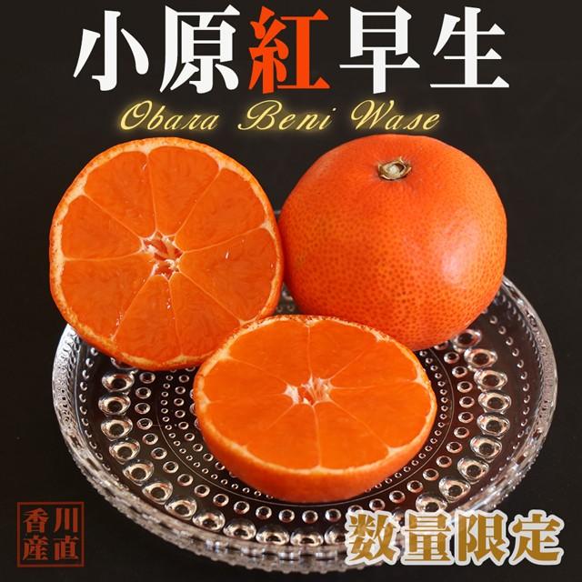 小原紅早生 みかん 約5kg 3S〜3L玉 高糖度 送料無料 お歳暮 御歳暮 数量限定 限定品 香川産 蜜柑 ミカン 柑橘 柑橘類 果物 くだもの フル