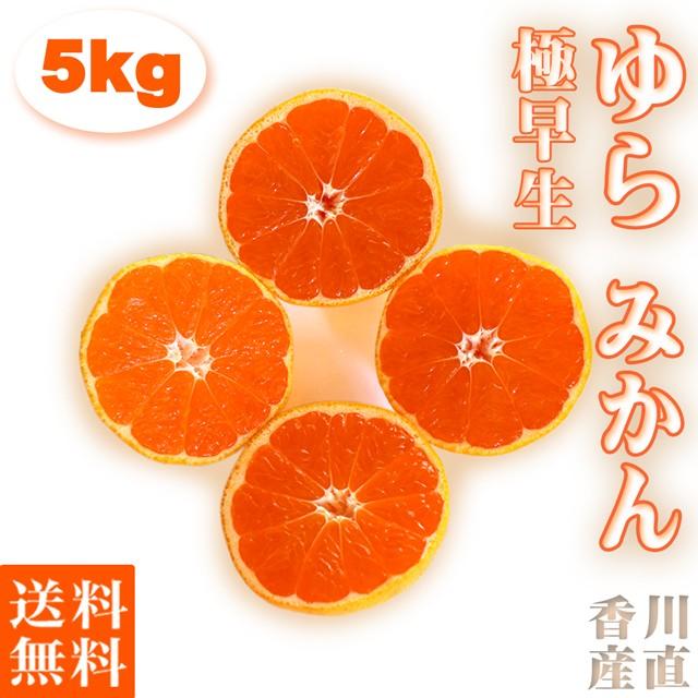 みかん 由良 ゆら 極 早生 5kg 小玉(3S〜S) 送料無料 高糖度 限定 香川産 秀品 果物 くだもの フルーツ ギフト ミカン 蜜柑 柑橘 温州