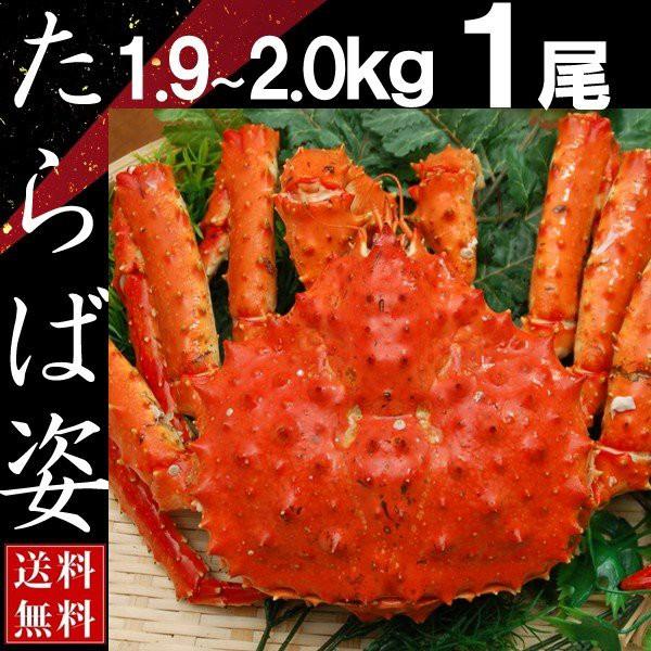 タラバガニ 姿 たらば蟹 脚 足 ボイル 1.9kg〜2kg 1尾 冷凍 北海道加工 送料無料 かに ギフト プレゼント お買い得