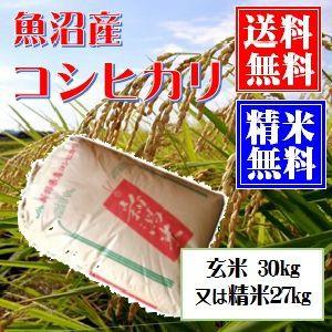 魚沼産コシヒカリ 玄米30kg 又は 白米27kg小分け可 令和元年産 送料無料(本州のみ) お米