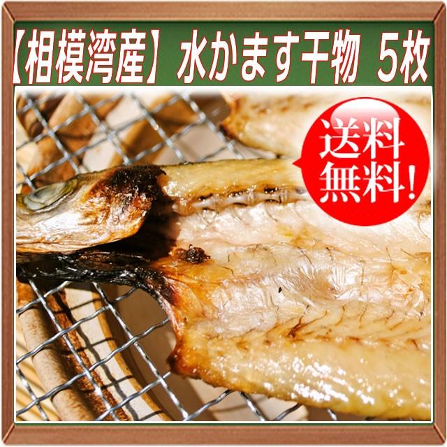 【相模湾産】水かます干物 5枚 送料無料 カマス 小田原産 お取り寄せ ギフト プレゼント 魚 食品 食べ物 おかず ご飯のお供