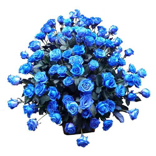 ブルーローズ フラワーアレンジメント ブルーローズ100本アレンジメント 送料無料 贈答 ハロウィン お歳暮