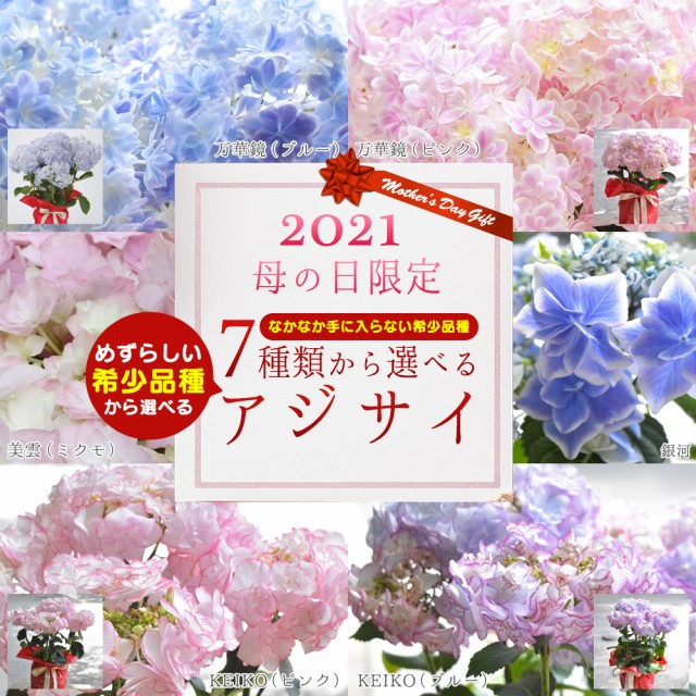 まだ間に合う 母の日 プレゼント 万華鏡 銀河 KEIKO 茜雲 星あつめ 稀少品種 2021新品種追加 あじさい アジサイ 5号鉢 ギフト 鉢植え 花