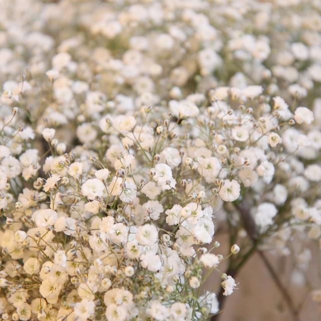 【単品でのご注文はできません】かすみ草追加 かすみそう カスミソウ 追加 ブーケ 花束 アレンジメント プレゼント 贈答 イーグルス 感謝