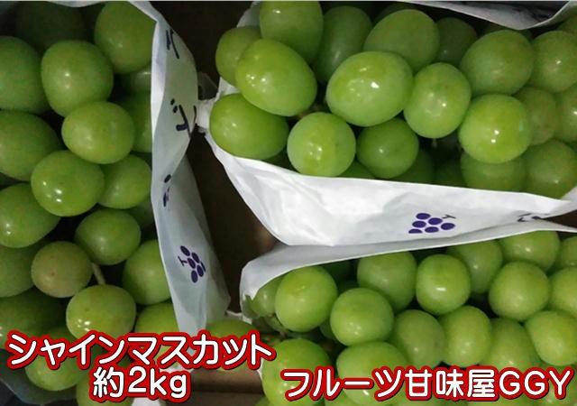 シャインマスカット 約2kg(3〜6房)熊本産・福岡産 クール便発送