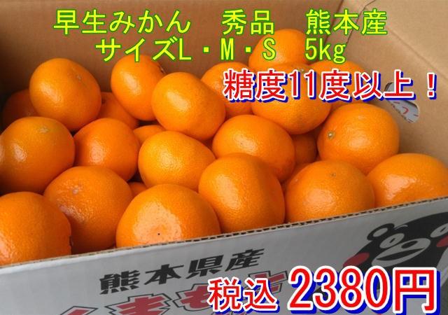 早生みかん 秀品 1箱5kg サイズL・M・S 熊本産 フルーツ グルメ