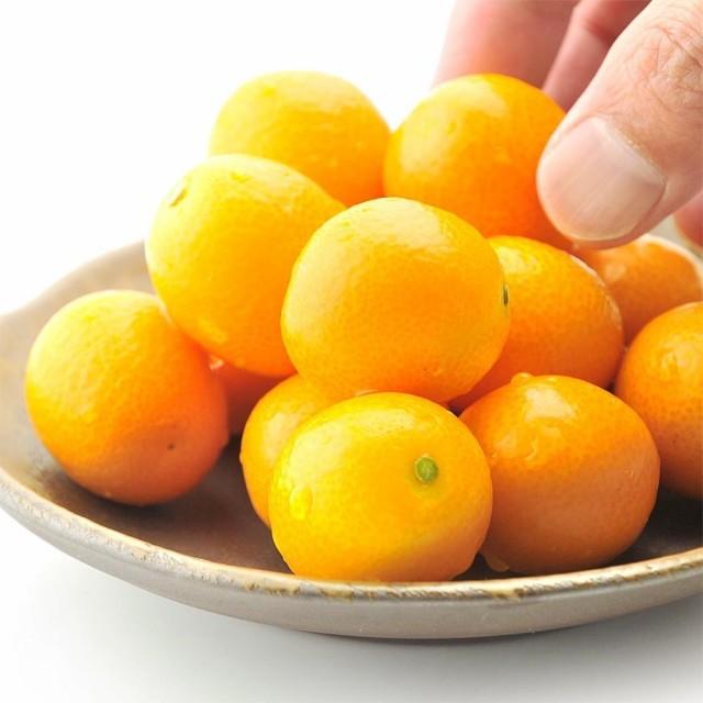 完熟 きんかん たまたま 3kg 木熟 金柑 贈り物 フルーツ ギフト 送料無料