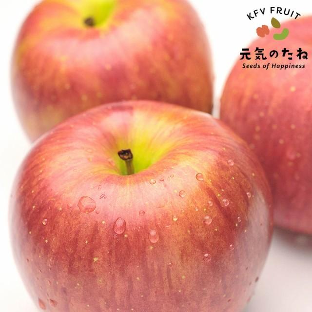 果物 ギフト 長野県産 サンふじ りんご 1箱 10kg 糖度センサー選別 送料無料