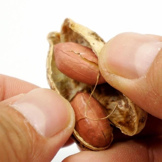 国産ピーナッツ お得用 500g ナッツ 薄皮付きピーナッツ 国産 皮付きピーナッツ 送料無料