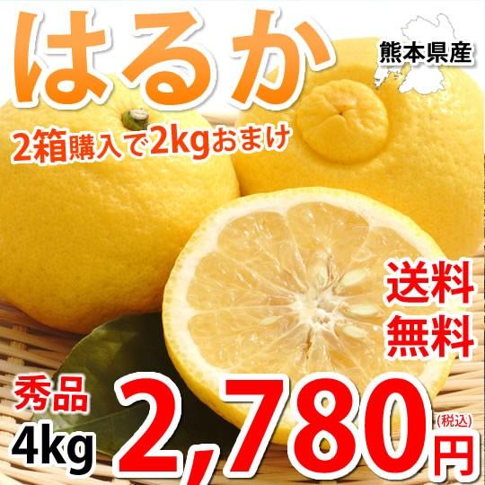 はるか みかん 送料無料 秀品 4kg M〜2L 2箱購入で2kgおまけ 平成生まれの新品種 はるかみかん ミカン 蜜柑