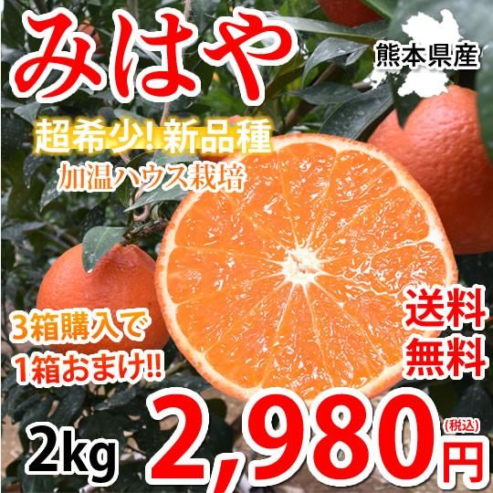 みはや みかん 送料無料 秀品 2kg 希少品種 熊本県産 3箱購入で1箱おまけ 蜜柑 早生みかん ミカン