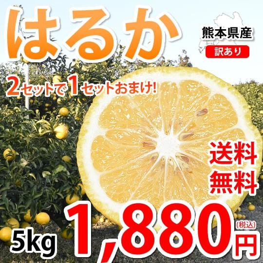 はるか みかん 5kg 送料無料 訳あり S〜2L 熊本県産 2セットで1セットおまけ はるかみかん ミカン 蜜柑