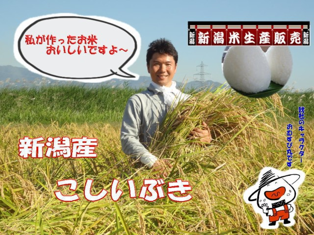 白いお米です R1 年新潟産新米こしいぶき白米 5kg 送料無料(東京、神奈川、千葉、埼玉、栃木、茨木、群馬、山梨地方の方ご注文はこちら
