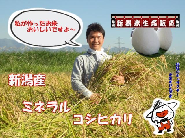 白米 白いお米です R1年新潟産新米ミネラルコシヒカリ 白米 5kg 送料無料(香川、徳島、愛媛、高知の方はこちらからご注文お願い致します