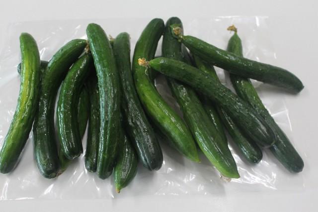 柿渋散布天然農薬栽培 きゅうり キュウリ 曲がり 少し大小混ざり 家庭用 関東送料無料1500gクール便 化学薬品を使わない野菜 ご希望で大