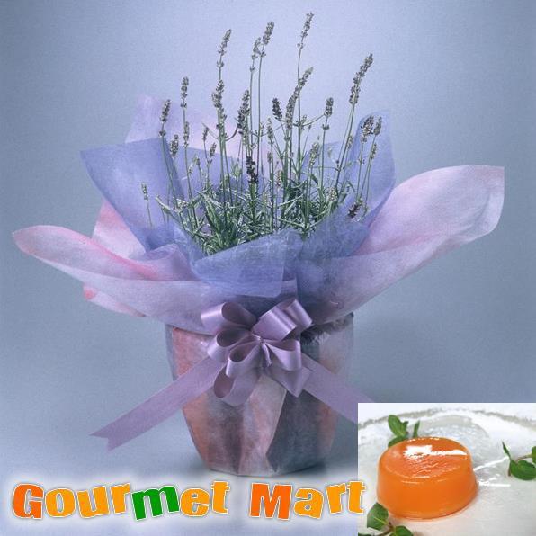 早割(4月10日まで) 送料無料!母の日ギフト!ラベンダー鉢植え(鉢花)と夕張メロンピュアゼリーセット!母の日定番のお花をラッピングして