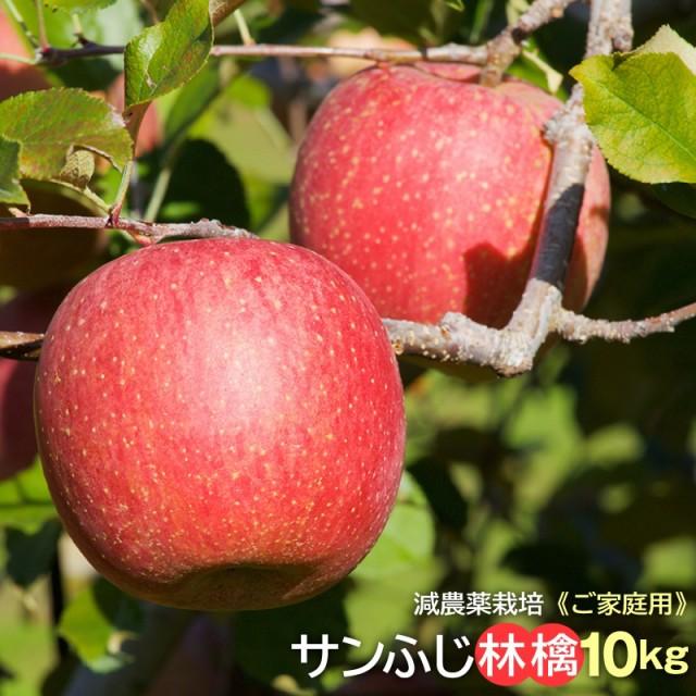 林檎 サンふじ リンゴ りんご ふじ フジ 産直 ご家庭用 信州小布施産 サンふじ林檎10kg 送料無料 減農薬栽培 蜜 のし可
