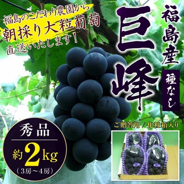 種無し巨峰 秀品 約2kg(3房〜4房)福島産 ご贈答用品質/化粧箱入り 1房約500g〜700g前後 葡萄 ぶどう ブドウ