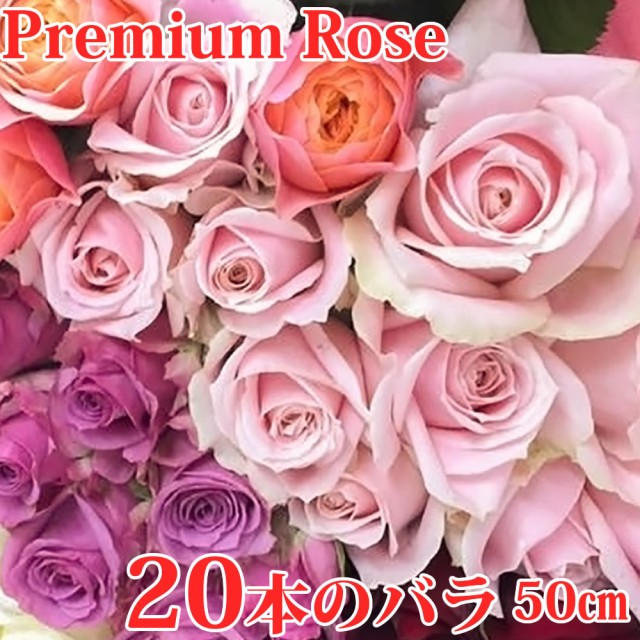 お祝いの20本のバラの花束 おまかせ(50cm×20本)お祝い用ローズギフト 無料ラッピング 産地直送 宅配便/徳島県海陽町産 薔薇 生花 切り