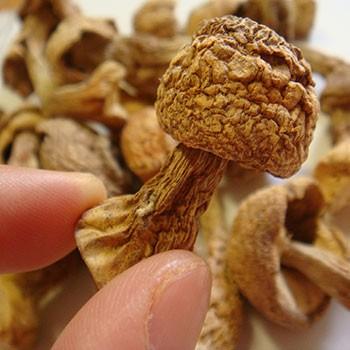 アガリクス茸100g 通販 キノコ きのこ なまため 祝 ギフト 犬猫 ドライ 乾燥 あがりくす 常温 * 5298