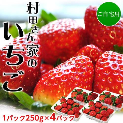 いちご イチゴ 苺 茨城県産 村田さん家のいちご 約250g×4パック ※冷蔵 送料無料