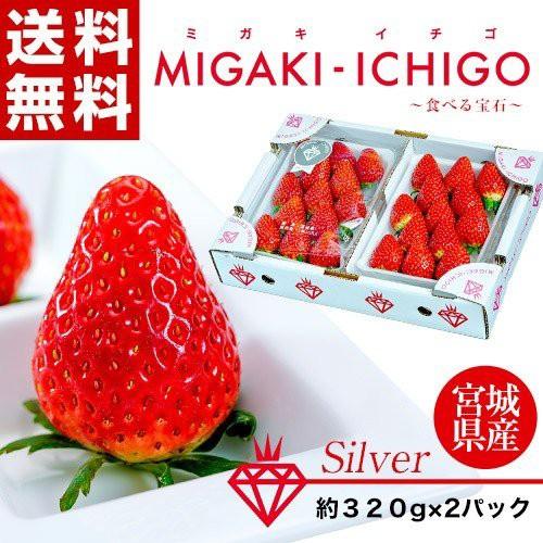 いちご イチゴ 苺 宮城県産 ミガキイチゴ シルバー 約640g(320g×2パック) ※冷蔵 送料無料