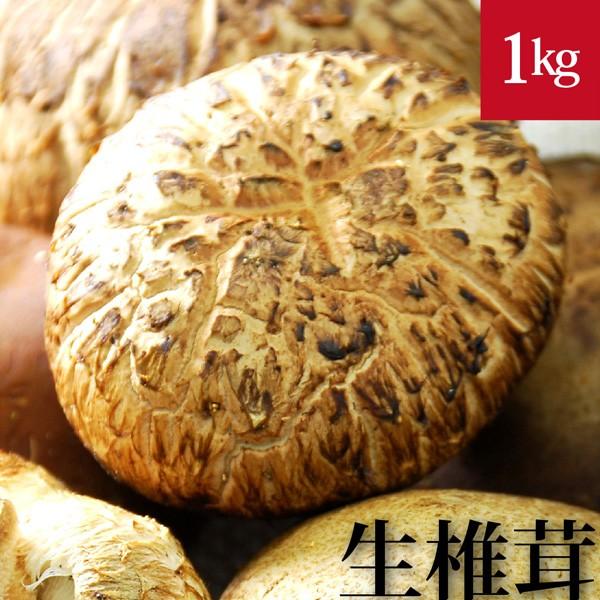 原木生椎茸 1kg 国産 無農薬