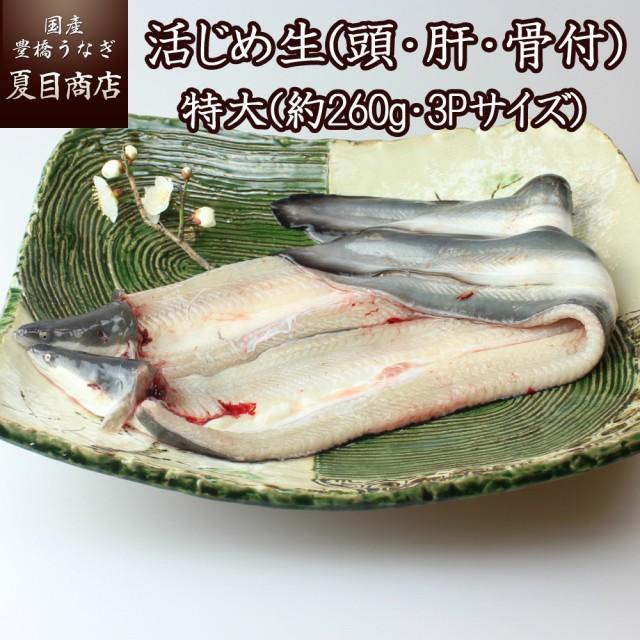 うなぎ 活じめ 生 (頭・肝・骨付) 特大(約260g・3Pサイズ)×2尾 (冷蔵) 国産 ウナギ 鰻 節分